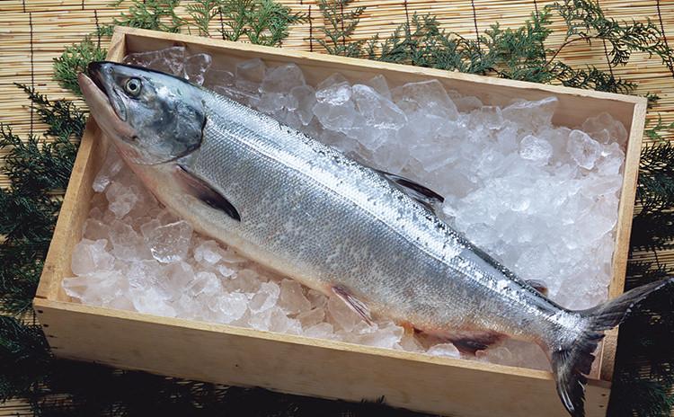 北海道産!新巻鮭
