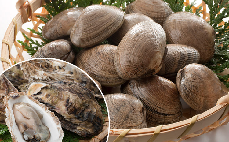 北海道厚岸産牡蠣とあさりのお得セット