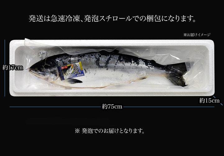 発送は急速冷凍、発泡スチロールでの梱包になります。鮭の内臓は除去してあります。真空袋に入れて、発泡でのお届けとなります。