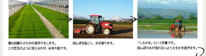 春は田植えのための苗作りをします。この芝生のように見えるのが、お米の苗です。 田んぼを起こし、水をはります。 「しろかき」という作業です。田んぼの水が流れないよう土をかき混ぜます。