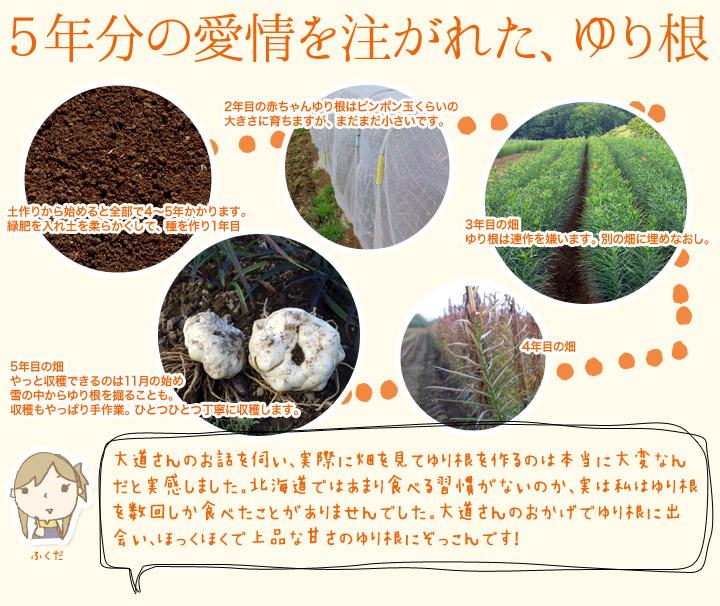 ゆり根の成長過程