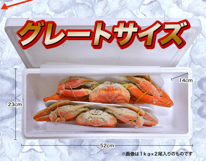 グレートサイズのずわい蟹!