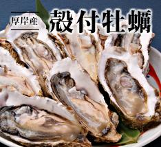 漁師さんより産直!厚岸産 殻付牡蠣