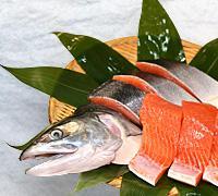 北海道産時鮭(時しらず)