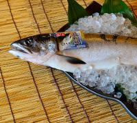 幻の鮭鮭児
