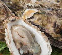 厚岸から産直!殻付牡蠣